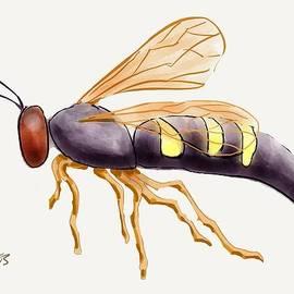 Stacy C Bottoms - Cicada Killer Wasp