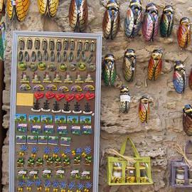 Pema Hou - Cicada Souvenirs
