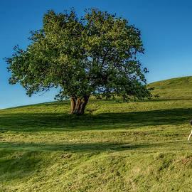 Ken Morris - Citadell Hill Stroll
