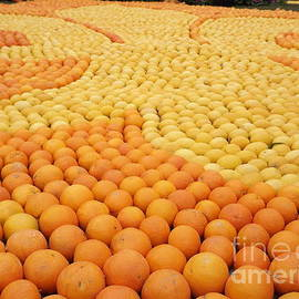 France  Art - Citrus Festival Menton