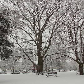 Catherine Gagne - City Park in the Snow