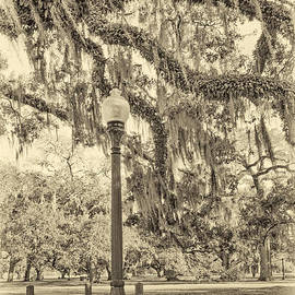 Steve Harrington - City Park Live Oaks sepia
