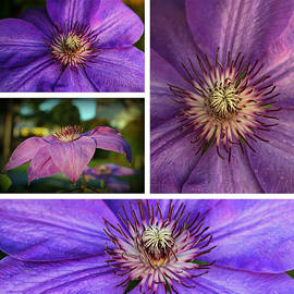 Lynn Hopwood - Clematis collage