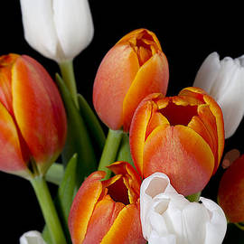 M and L Creations - Close Up Image Of Orange And White Tulips