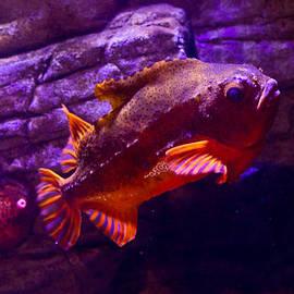 Eti Reid - Close up of a lumpfish