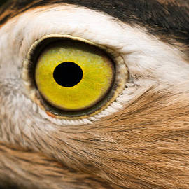 Jess Kraft - Closeup Eye of a Bird