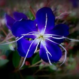 Debbie Robbins - Closeup in Blue