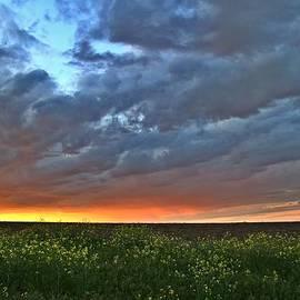 Lynn Hopwood - Clouds overhead