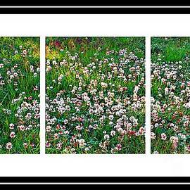 Barbara Griffin - Clover Triptych - Fragrant Flowers - Weeds