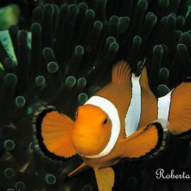 Roberta Sassu - Clown Fish