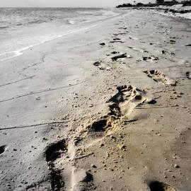 Laurie Pike - Coastal Walks