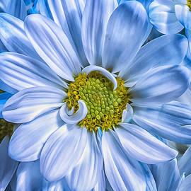 Bill Tiepelman - Cobalt Blue Petals