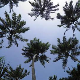 Chris Green - Coconut trees