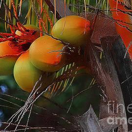 Vickie Emms - Coconuts