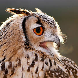 Roeselien Raimond - Cold Breathe _ Eagle Owl in the Winter