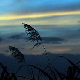 Miel  Paculanang - Cold Sunset