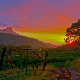 Colibri Sunrise