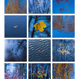 Alexander Senin - Collage November - Featured 3