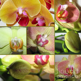 Elena Yakubovich - Collage Orchids 01Yellow Green - Elena Yakubovich