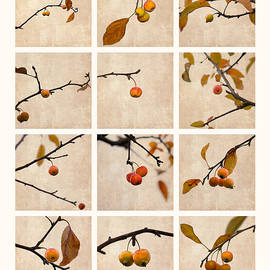 Alexander Senin - Collage Paradise Apple