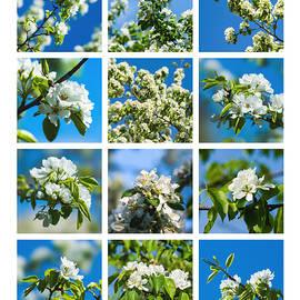 Alexander Senin - Collage Spring Blossoms 1