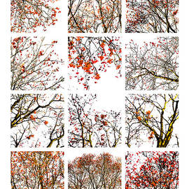 Alexander Senin - Collage The Beauty Of Rowan