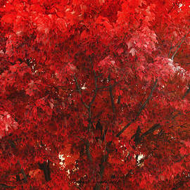 Thomas Woolworth - Color In The Tree 02