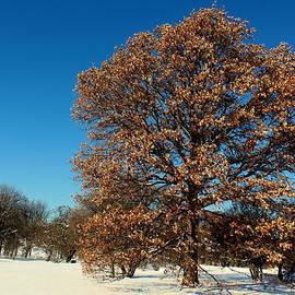 Rosanne Jordan - Color in Winter