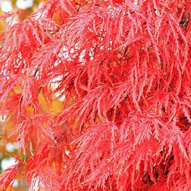 E Faithe Lester - Color Me Red