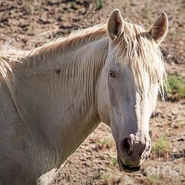Janice Rae Pariza - Colorado Blue Eyed Mustang