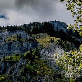 Janice Rae Pariza - Colorado Color on the Mountain