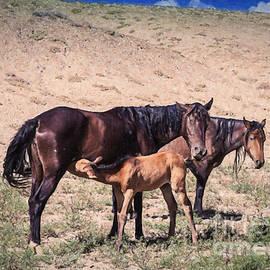 Janice Rae Pariza - Colorado Desert Mustangs