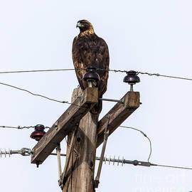 Janice Rae Pariza - Colorado Golden Eagle