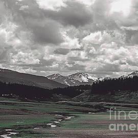 Janice Rae Pariza - Colorado Green Alpine