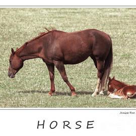 Janice Rae Pariza - Colorado Horse