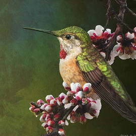 R christopher Vest - colorado hummingbird portrait
