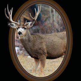 Shane Bechler - Colorado Muley