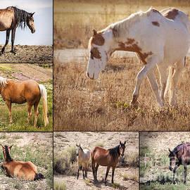 Janice Rae Pariza - Colorado Mustang Collage