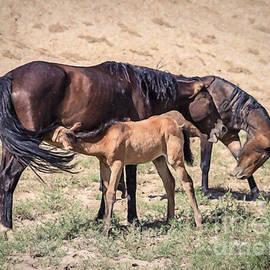 Janice Rae Pariza - Colorado Mustang Family