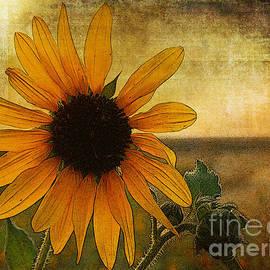 Janice Rae Pariza - Colorado Summer Sunshine Floral