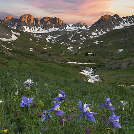 Rob Greebon - Colorado Wildflower Images - Columbine at American Basin 1