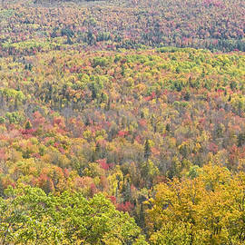 Keith Webber Jr - Colorful Autumn Forest In Mount Blue State Park Weld Maine