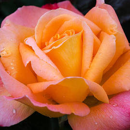 Jordan Blackstone - Colorful Beauty