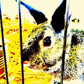 Kathy Barney - Colorful Bunny