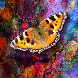 Lilia D - Colorful butterfly