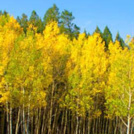 Brian Harig - Colorful Colorado 2