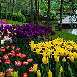Jenny Rainbow - Colorful Corner of the Keukenhof Garden. Tulips Display. Netherlands
