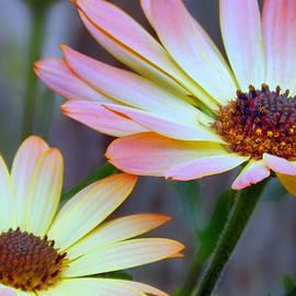 Nina Bradica - Colorful Daisies