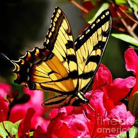 Nava Thompson - Colorful Flying Garden