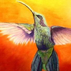 Jay Johnston - Colorful Hummingbird